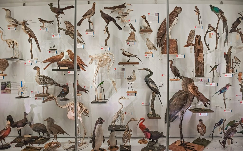 Bird display of Museum of Zoology