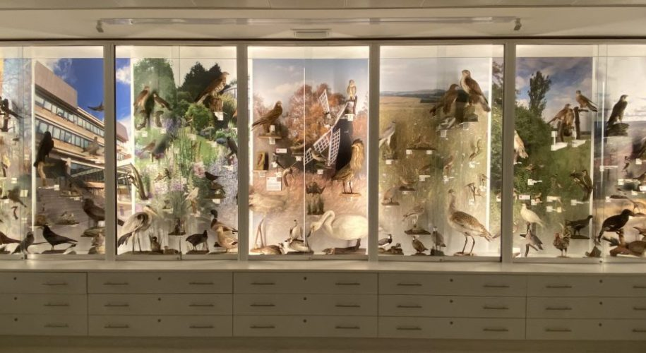 British bird display at the Museum of Zoology