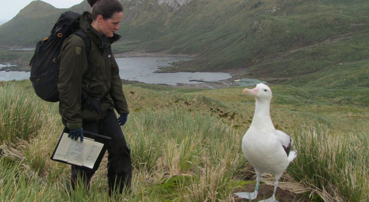Ana Carneiro looking at albatross