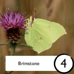 Brimstone bingo