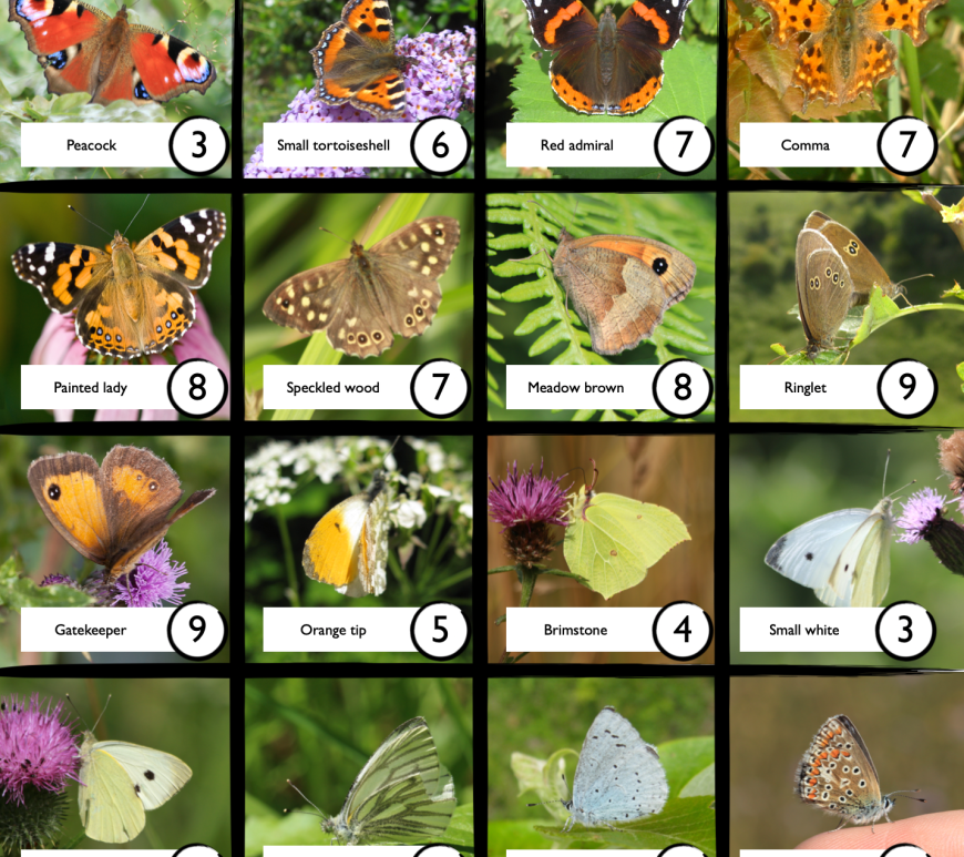 Butterfly Bingo species