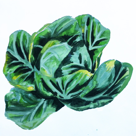 Cabbage painting. Credit S Steele