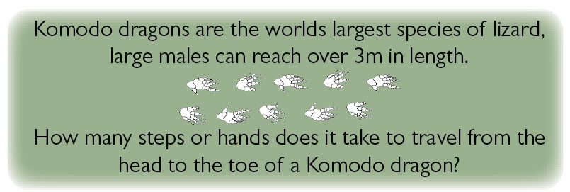 Komodo dragons are the worlds largest species of lizard, large males can reach over 3m in length. How many steps or hands does it take to travel from the head to the toe of a komodo dragon?