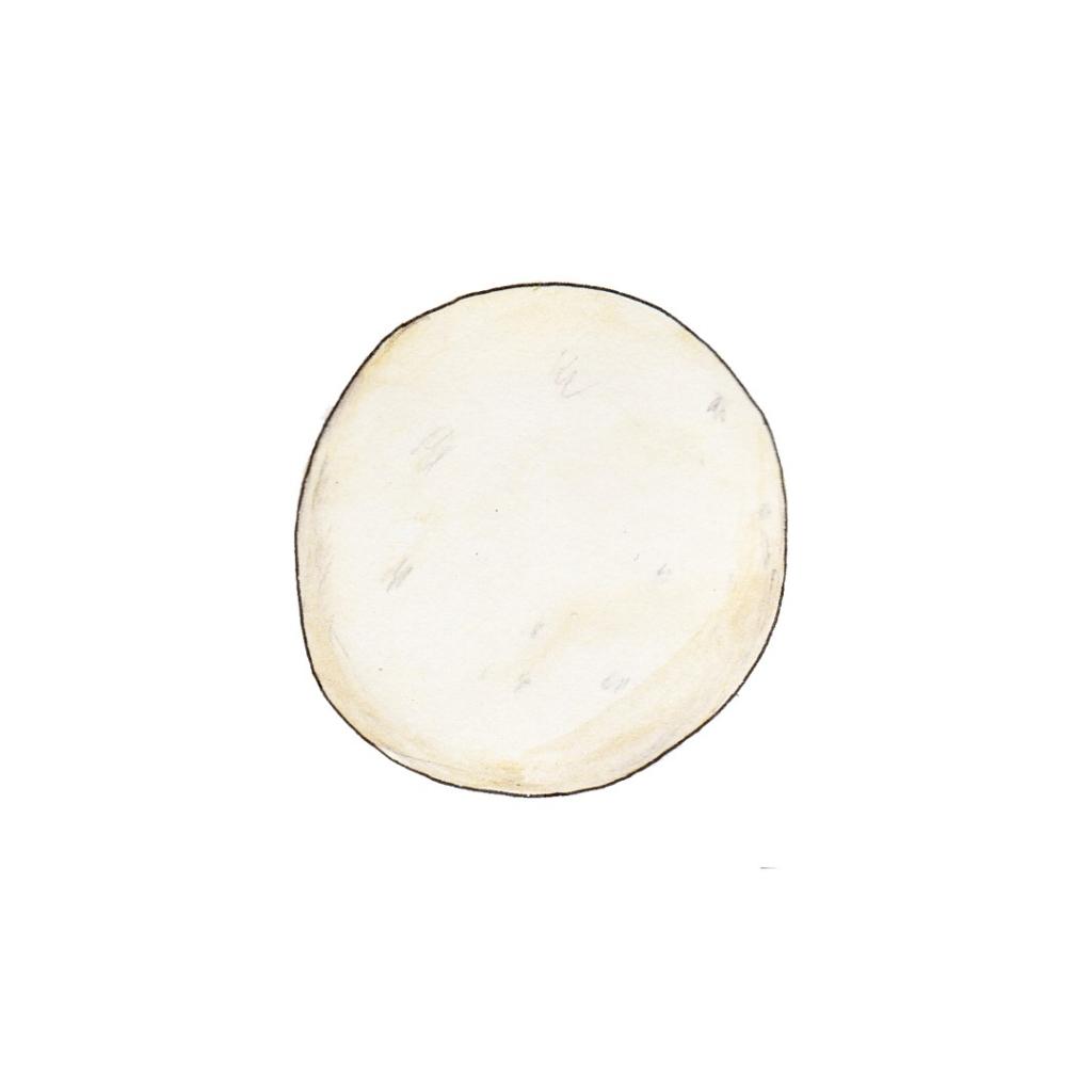 Illustration of a round egg