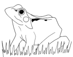 line drawing of a common frog