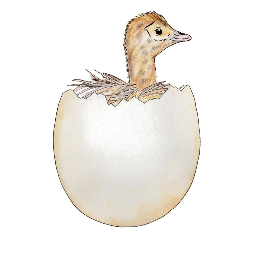 Illustration of ostrich egg with chick inside