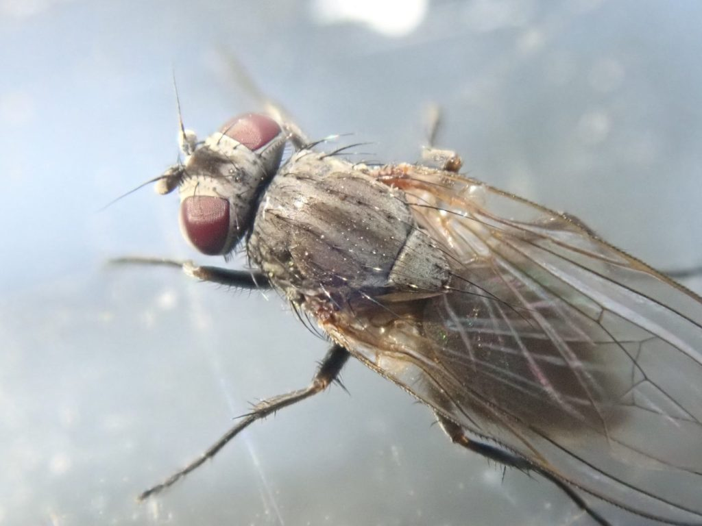 Close up photograph of a fly