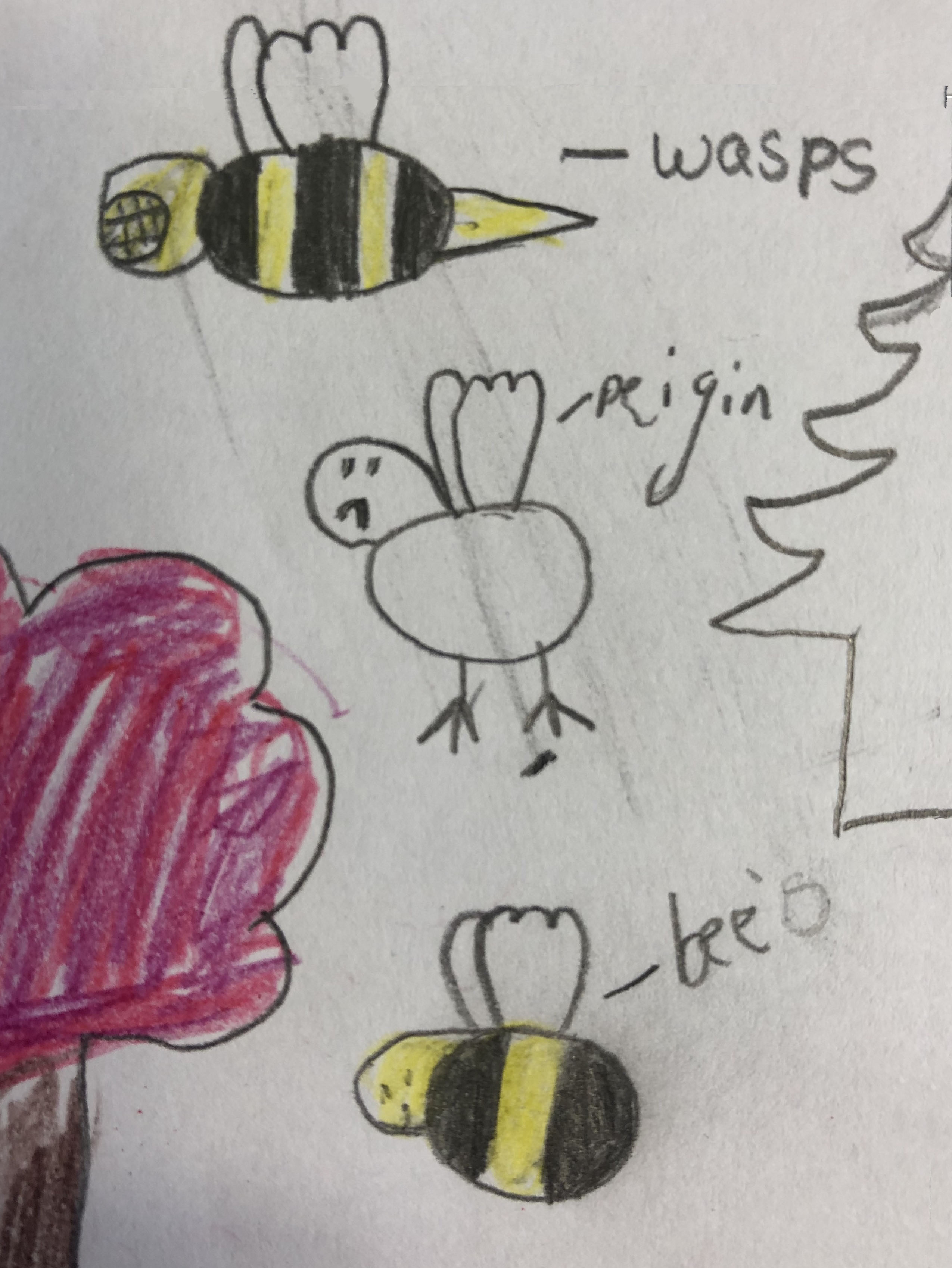 """Primary school child's drawing showing different attitudes towards bees and wasps'"