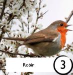 Robin photograph from Bird Bingo sheet
