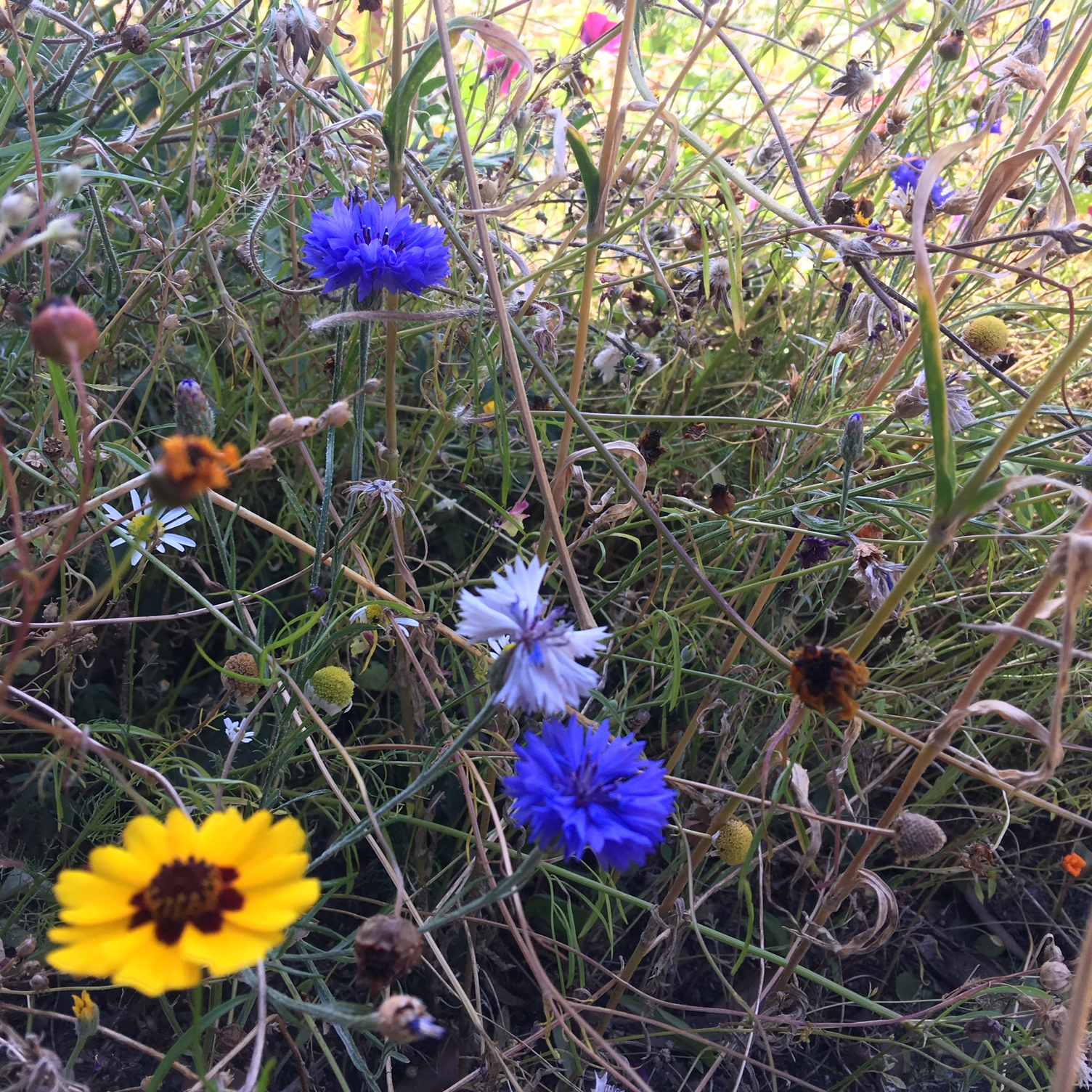 Wildflower patch. credit S Steele