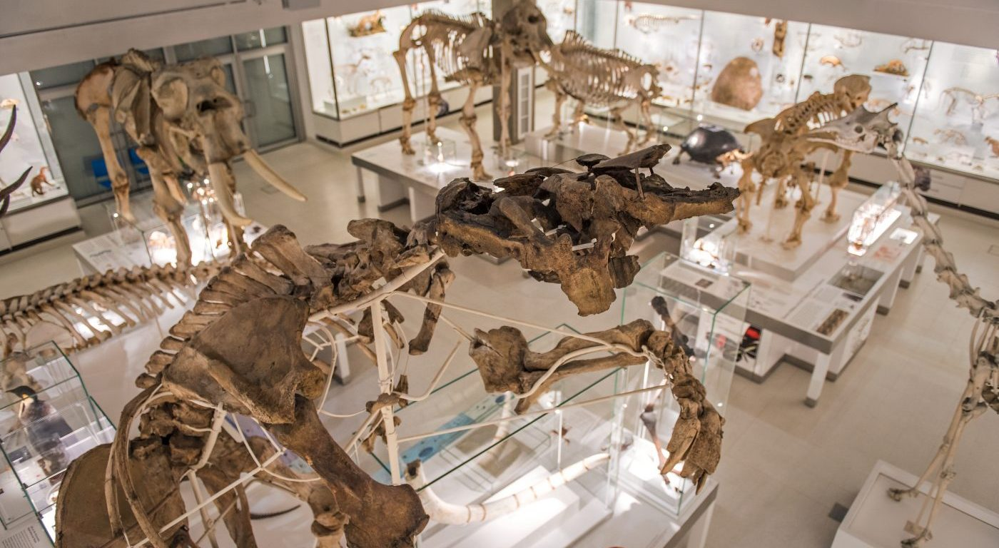 Photograph of the lower gallery of the Museum of Zoology focusing on the Giant Ground Sloth