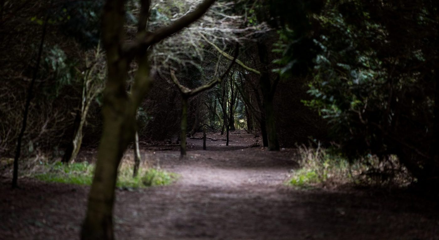 Conifers, Mead's Plantation. Credit John Howlett