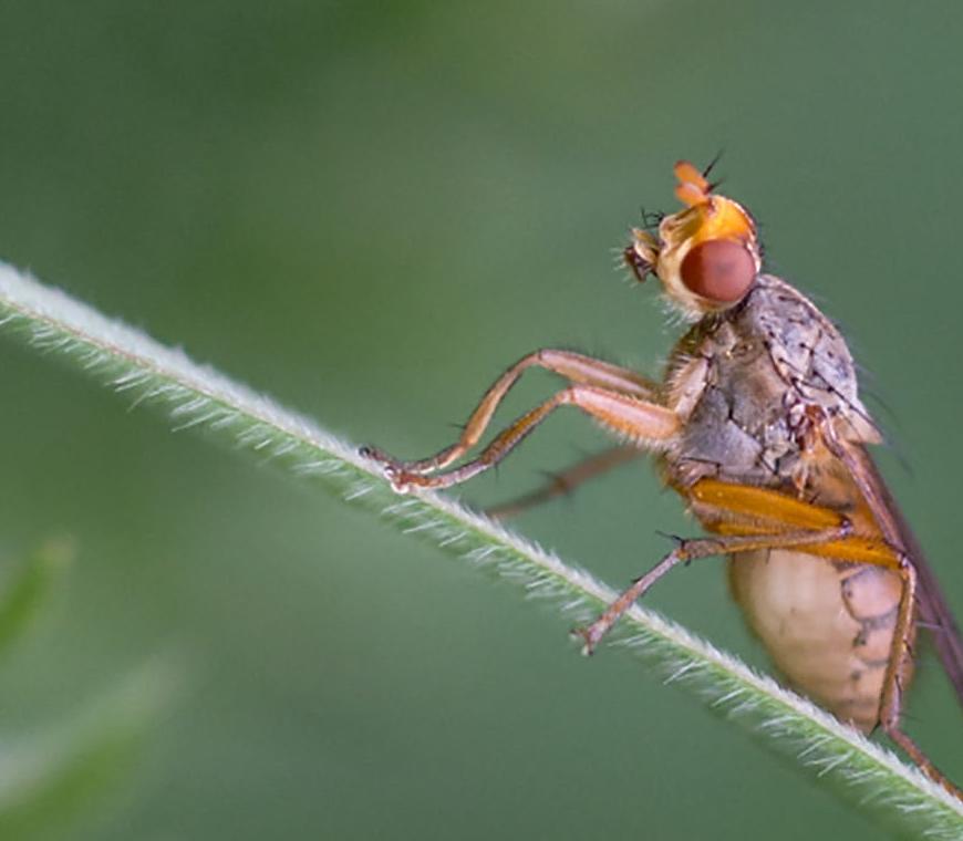 Fly. Image credit Geoff Oliver