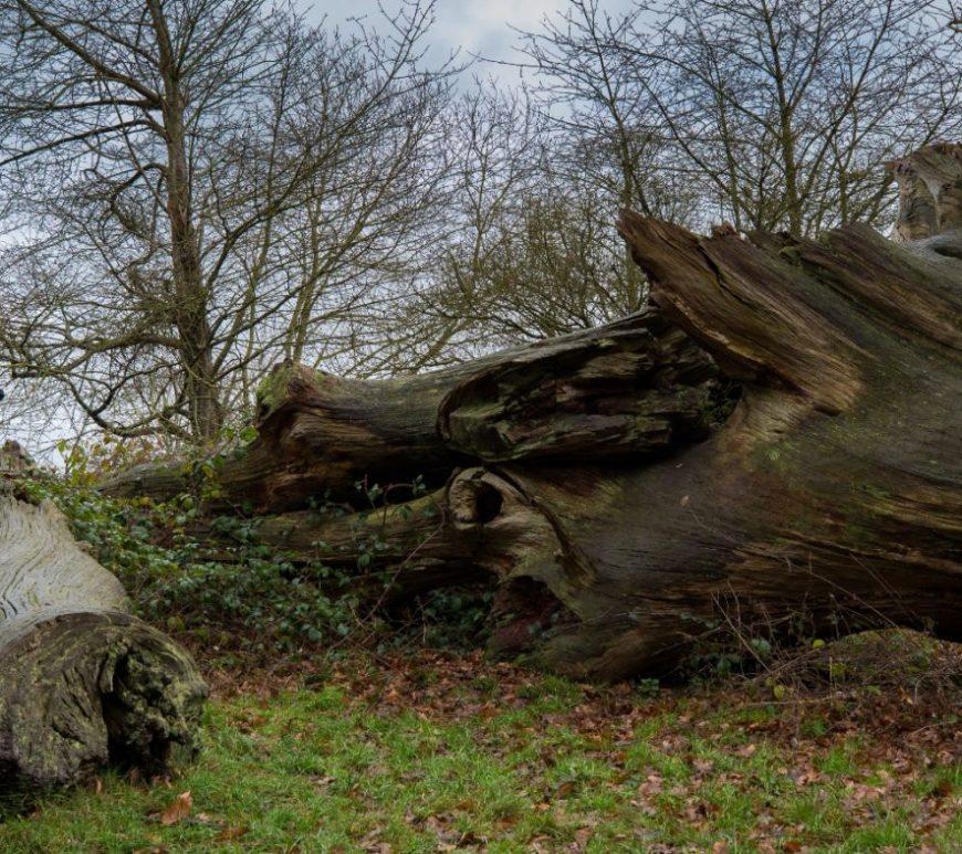 Kate climbing over a fallen tree