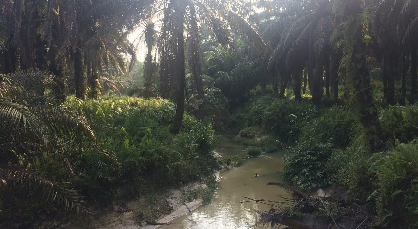 River running through oil palm