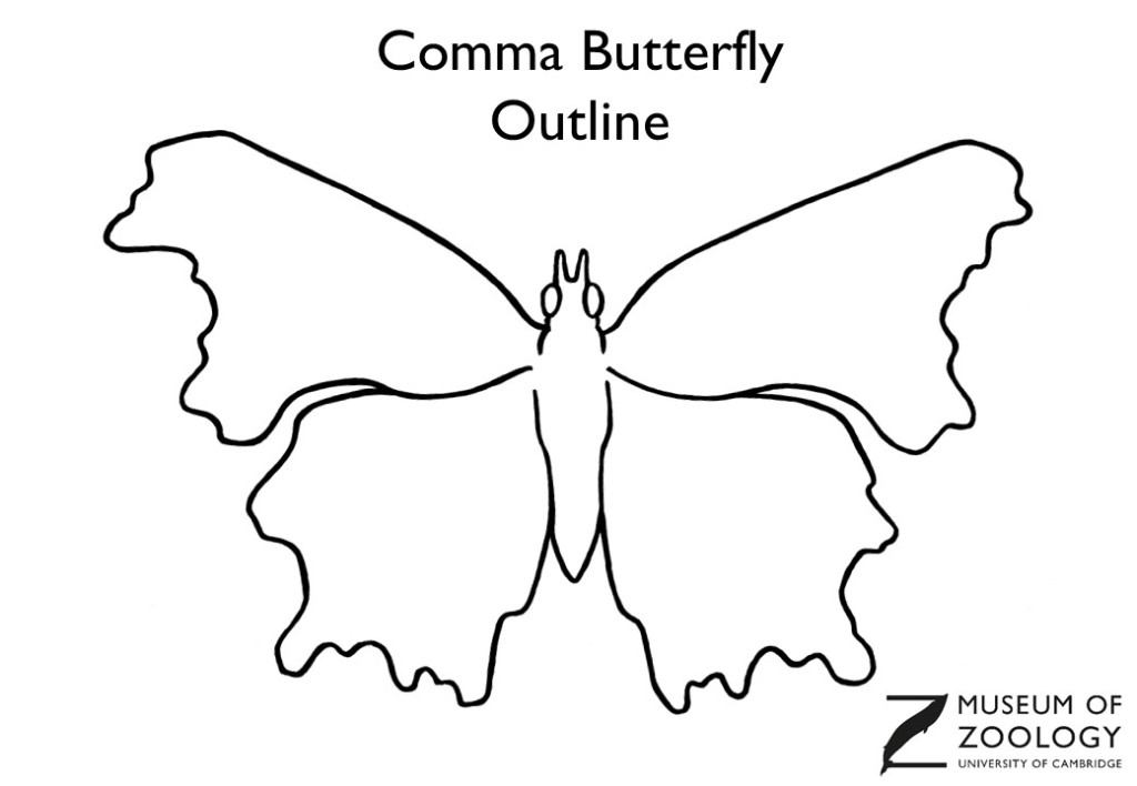 Outline drawing of a comma butterfly