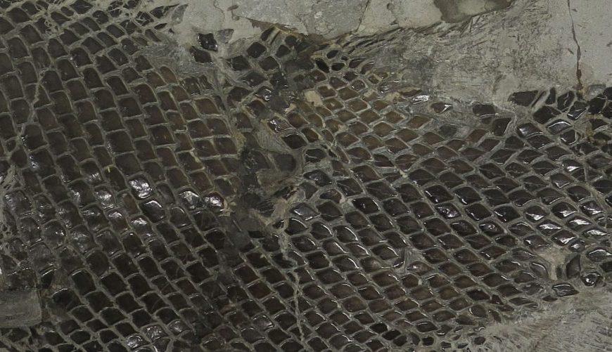 Fossil fish specimen