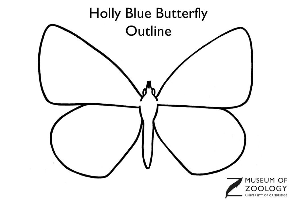 Outline drawing of a holly blue butterfly