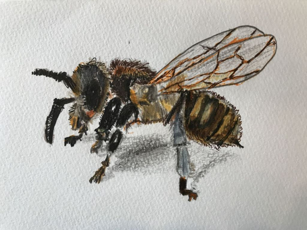 Bee painting, by Maito Shiode