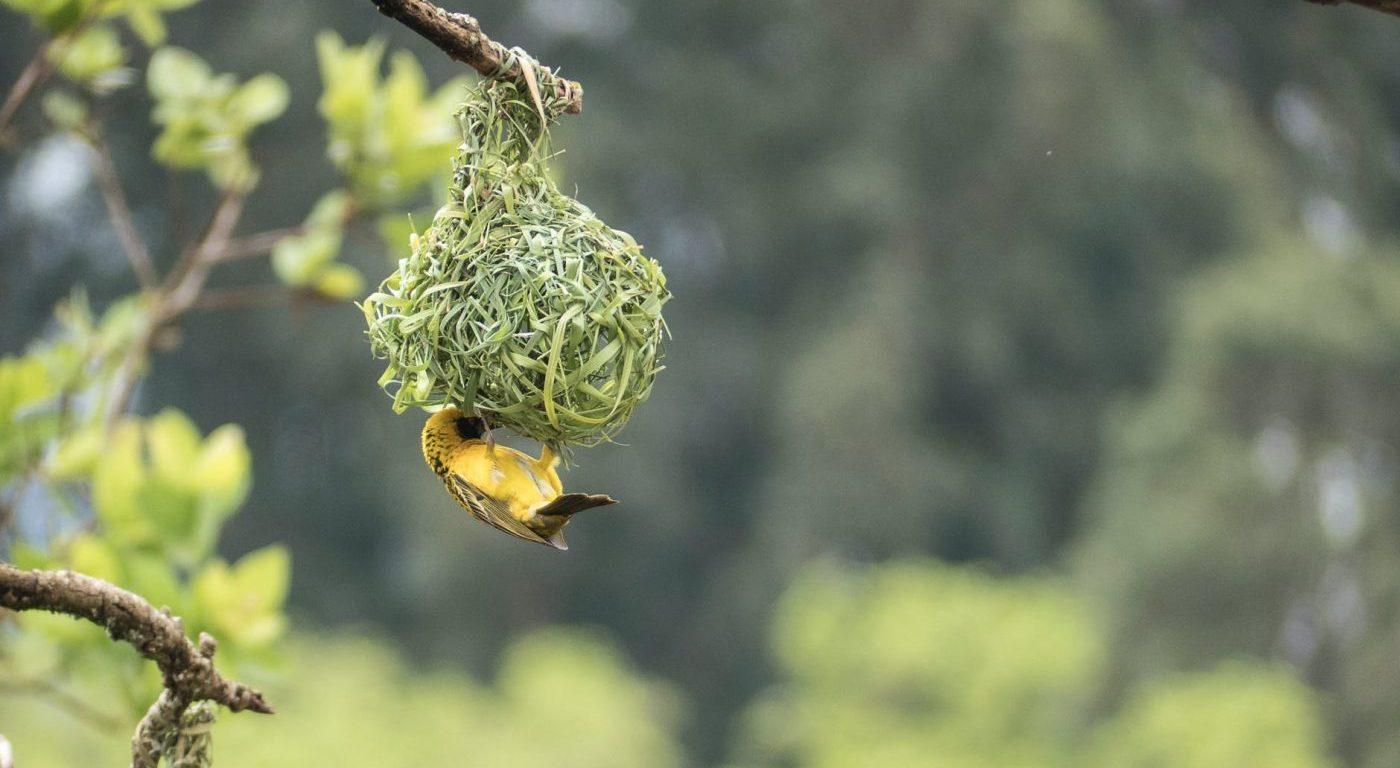 Bird perching under woven nest