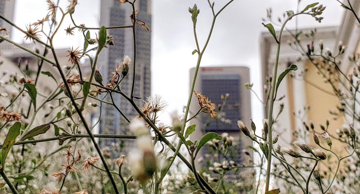 wildflowers in the city (c) Stanley Quek