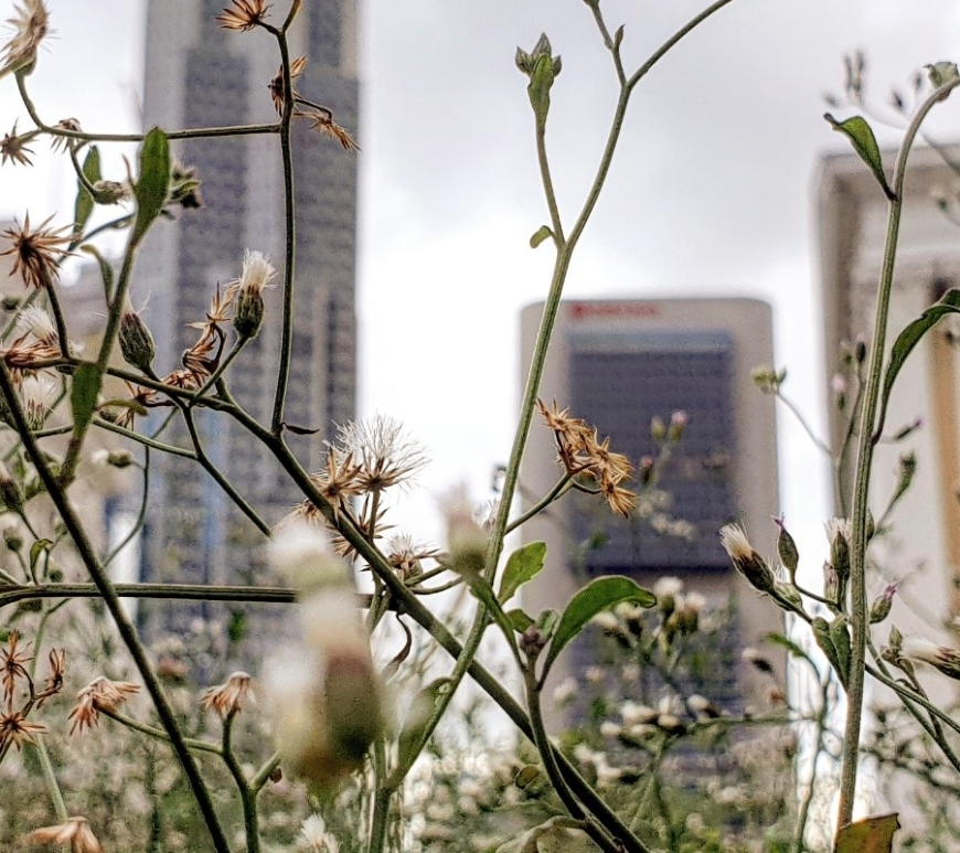 wildflowers in the city (c) Stanley Quek