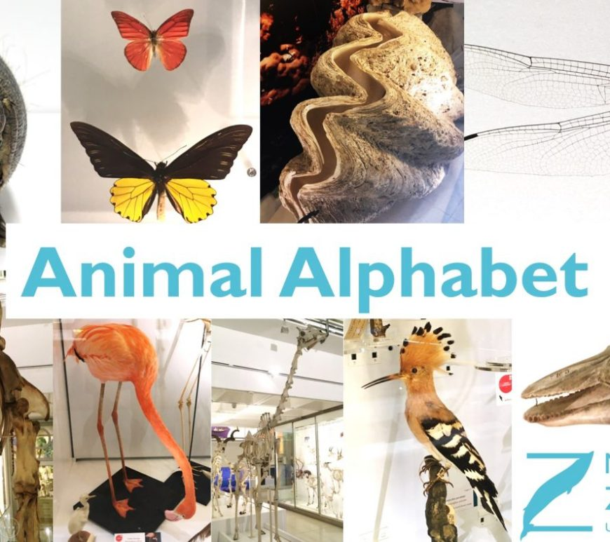 Animal Alphabet title page