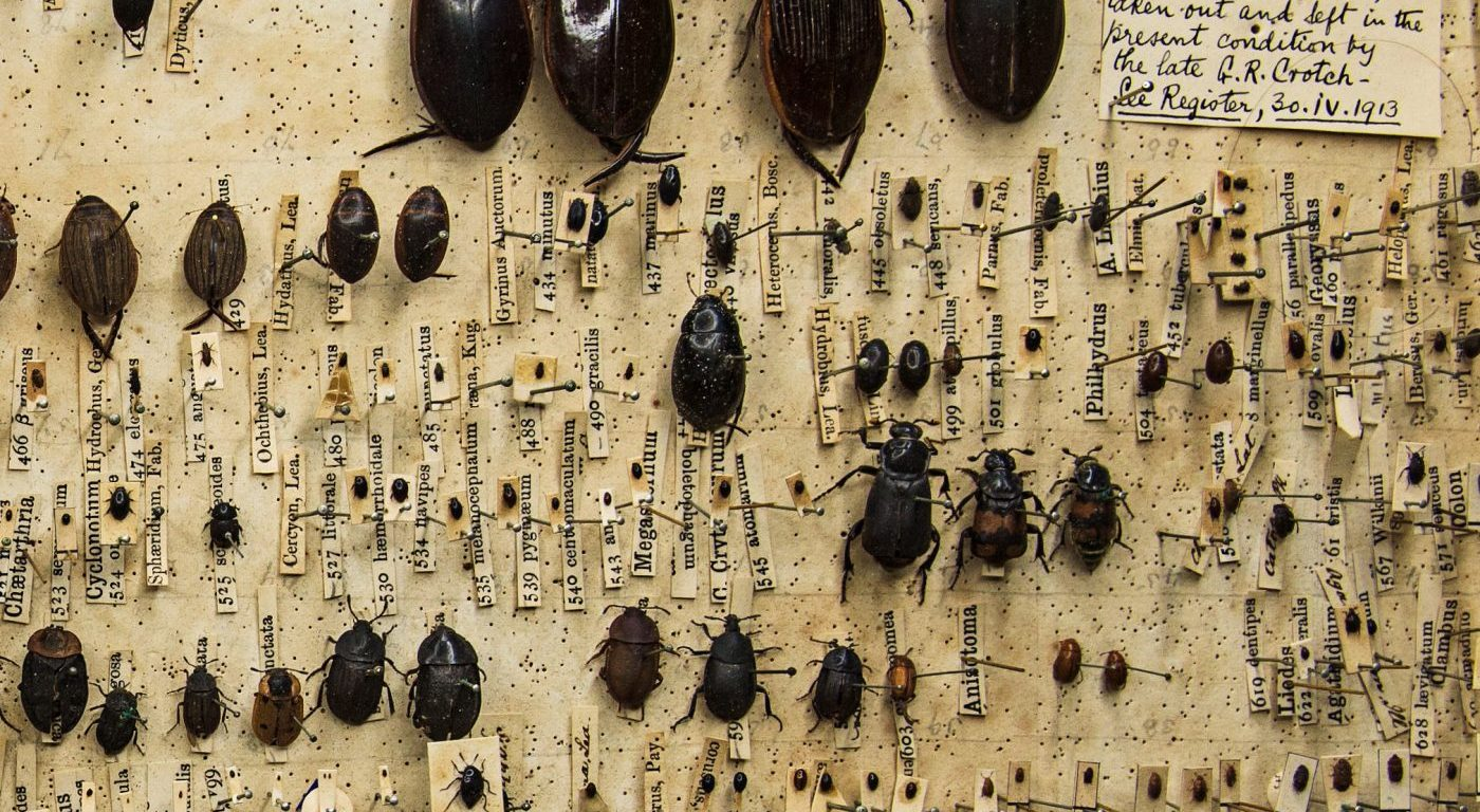 Close up of Darwin's beetle box