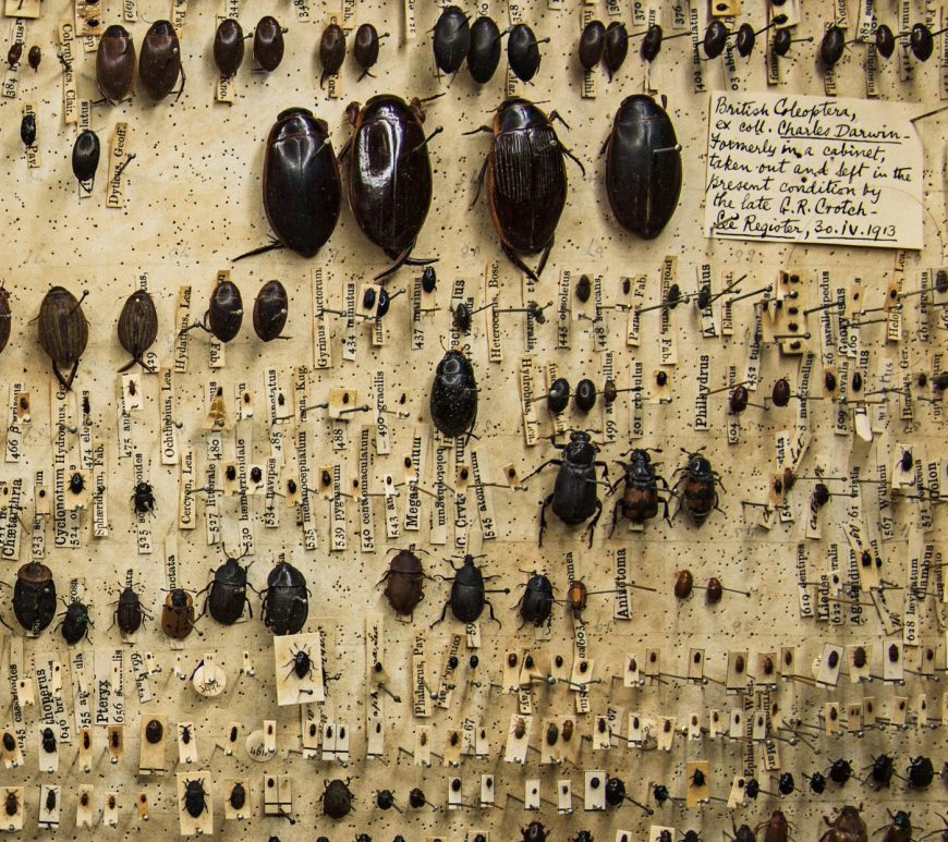 Close up of Darwin's beetle box