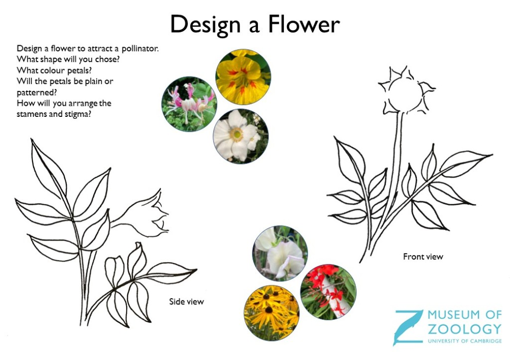 Design a Flower sheet