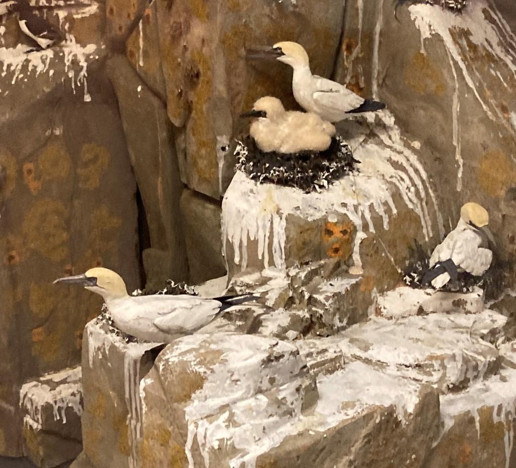 Model of nesting gannets