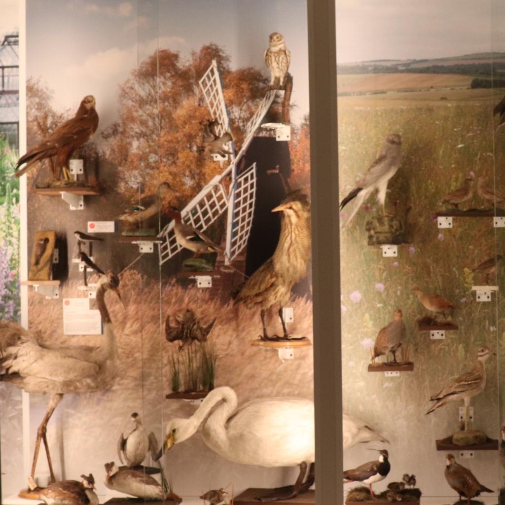 Wicken Fen display in the Museum of Zoology