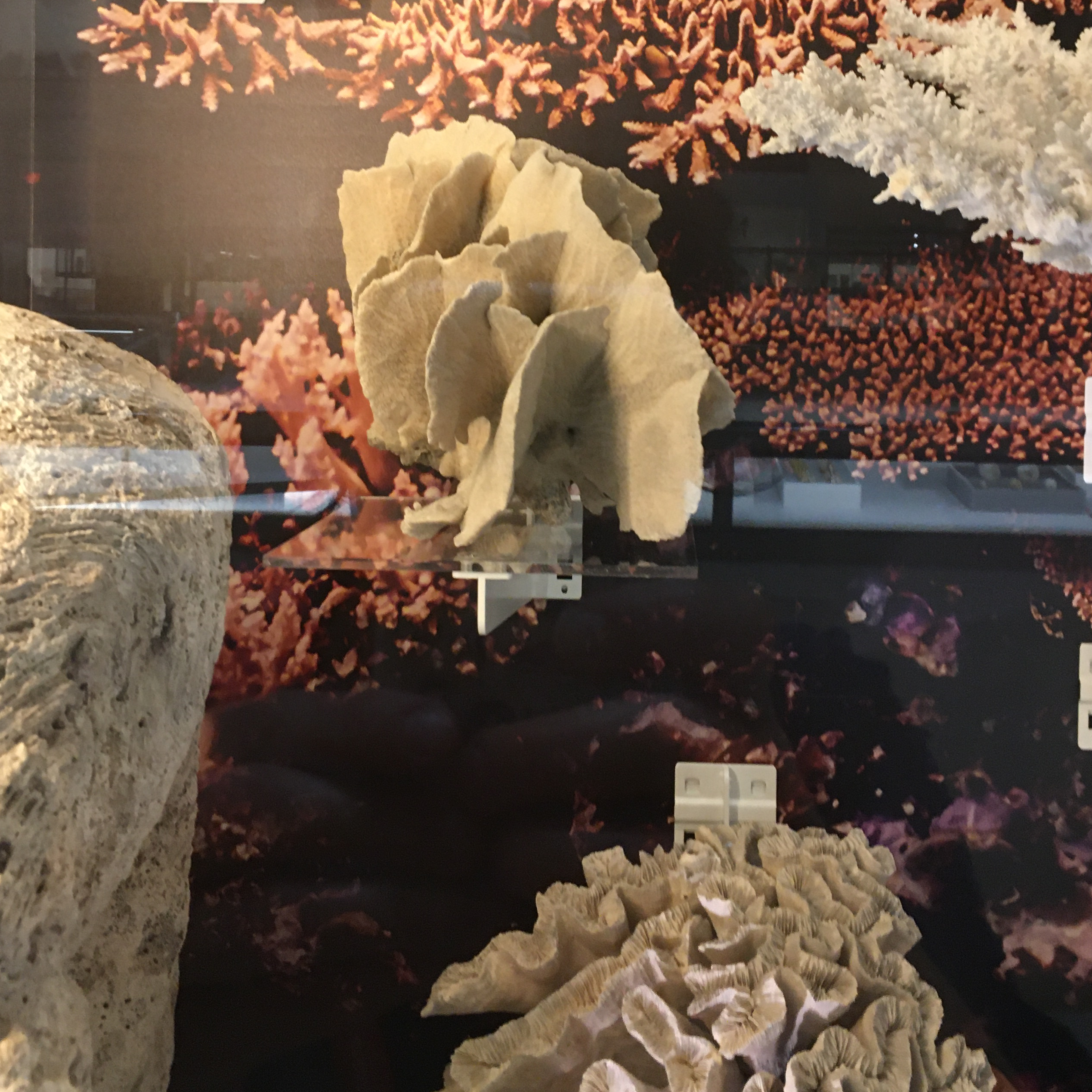 Corals on display in Museum of Zoology