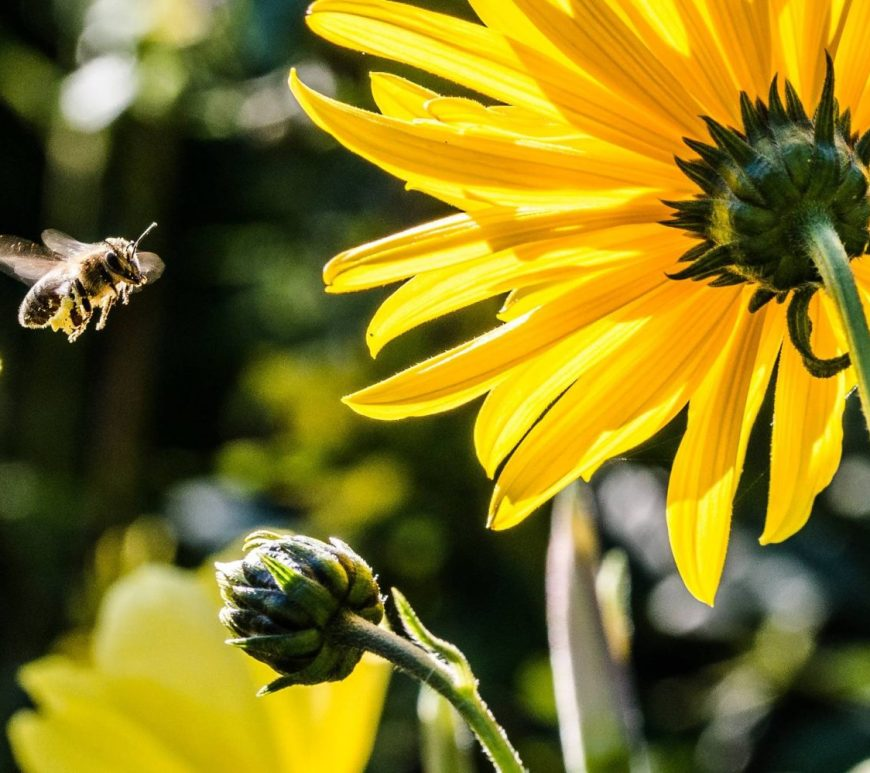 yellow petaled flower with black yellow bee during daytime