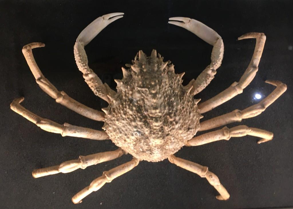 Crab specimen