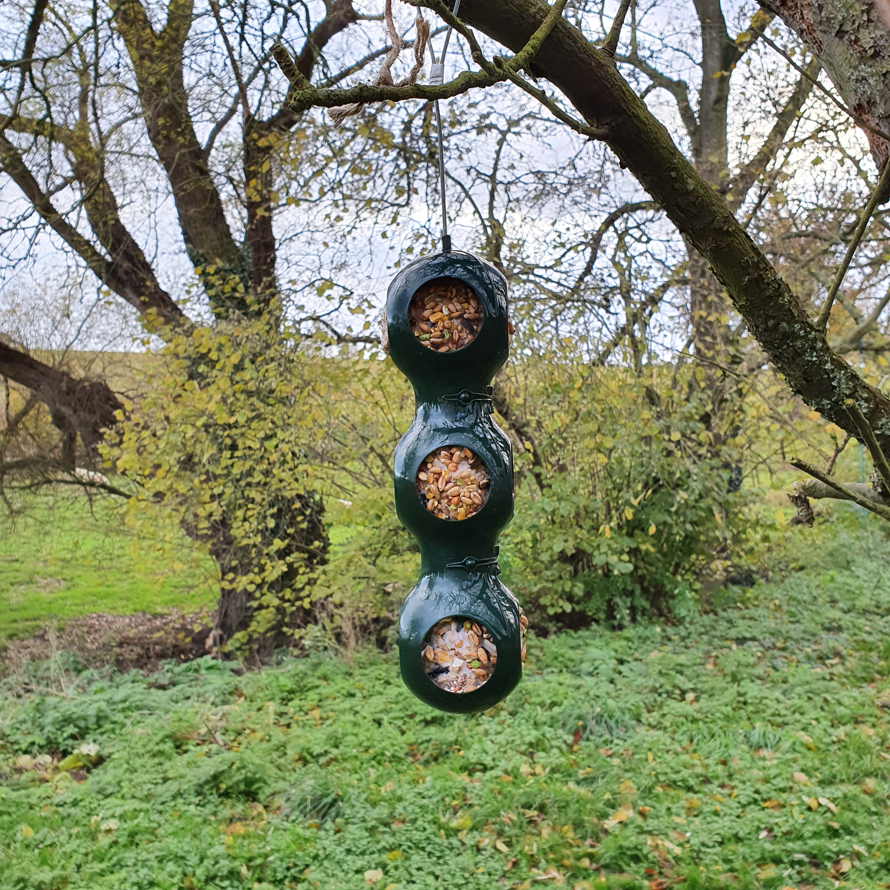 Finished seed cakes in a bird feeder