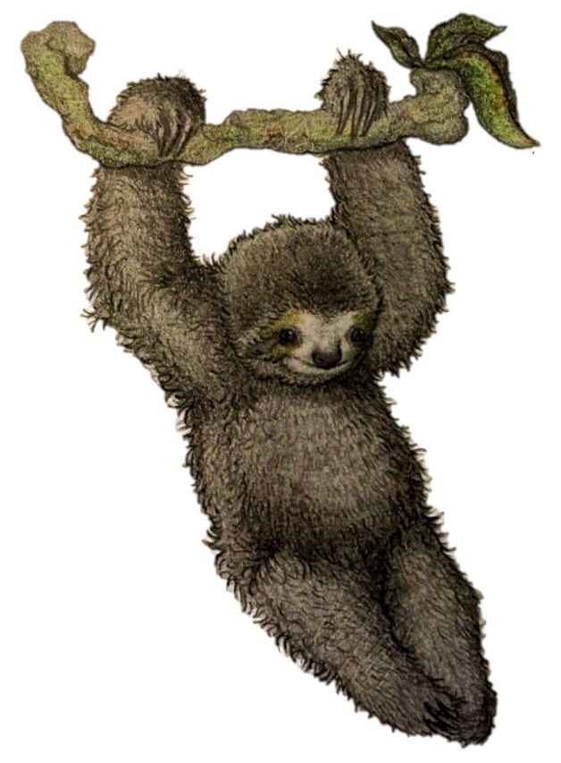 Illustration of a pygmy three-toed sloth hanging from the branch of a tree