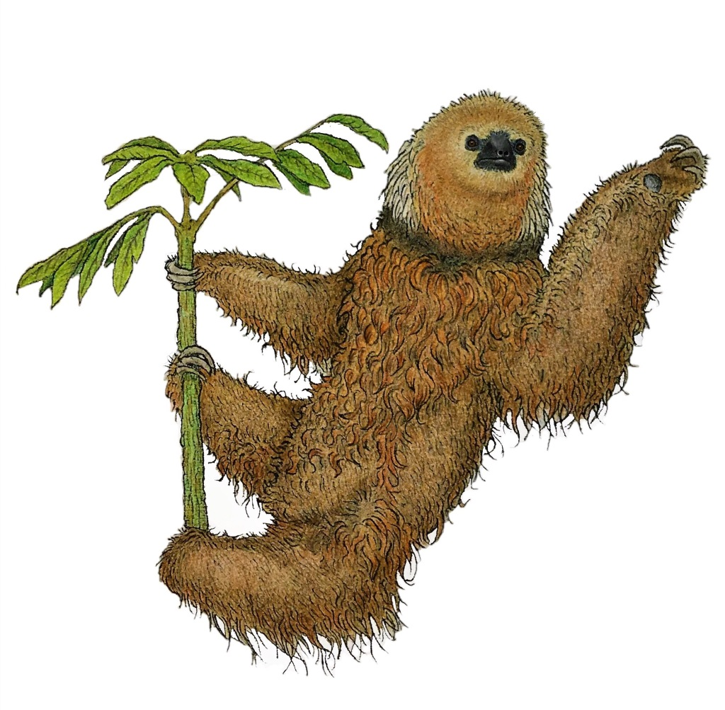 Illustration of a maned sloth