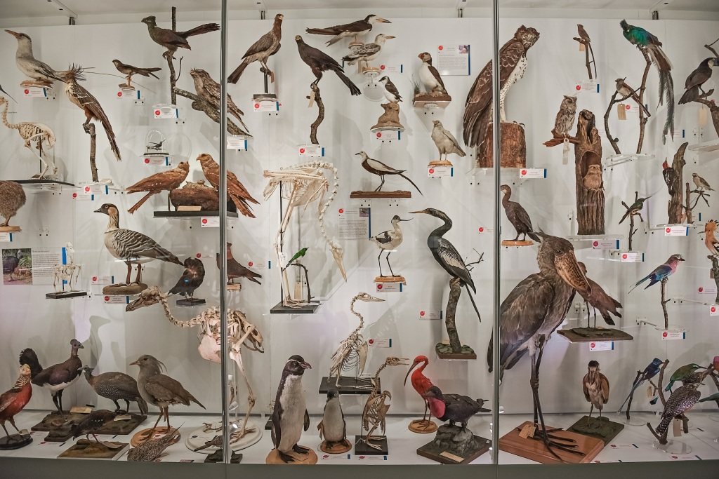 Photograph of the bird display of the Museum of Zoology