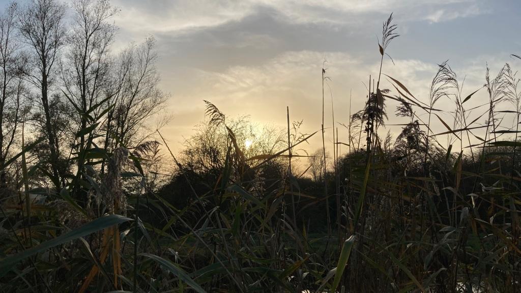 Photograph of long grasses at dusk