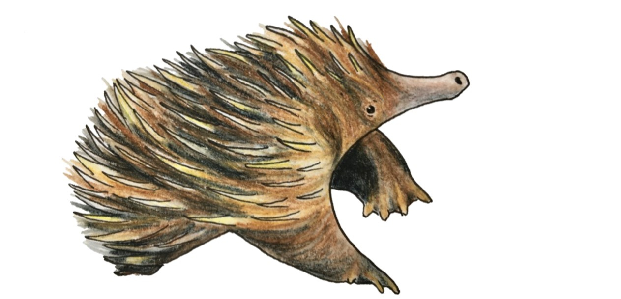 Illustration of a puggle, a baby echidna