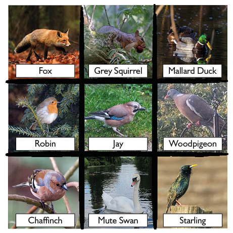 Winter wildlife spotter sheet first page preview