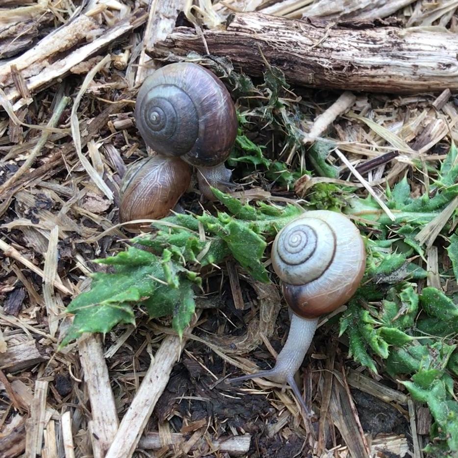 Snails on leaf litter