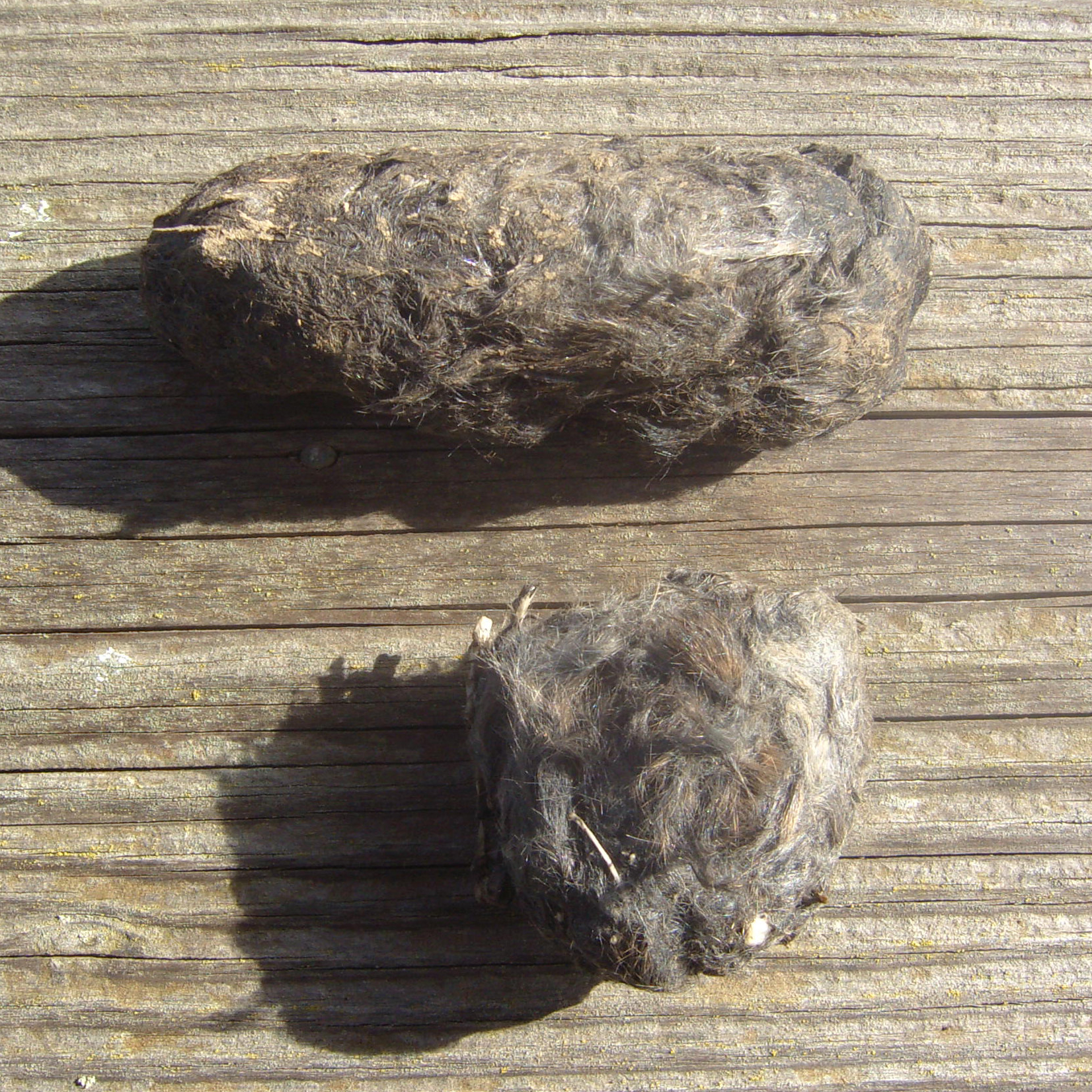Pair of owl pellets