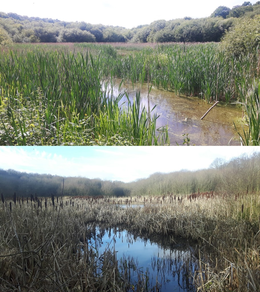 The wetland in June 2020 and January 2021