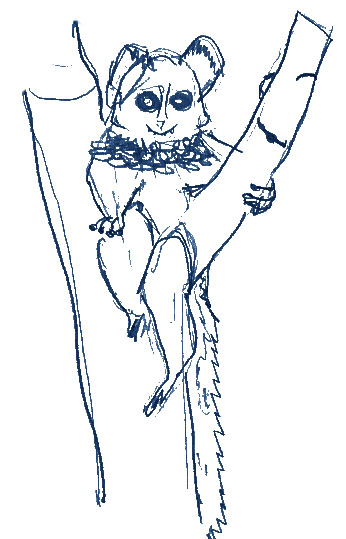 Southern lesser galago illustration by Gus age 10