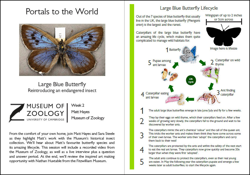 Preview of handout to accompany large blue butterfly video