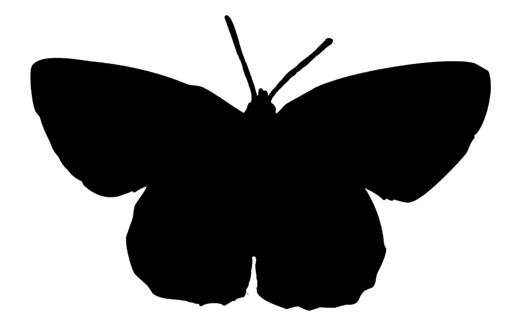 Butterfly silhouette template for art activity