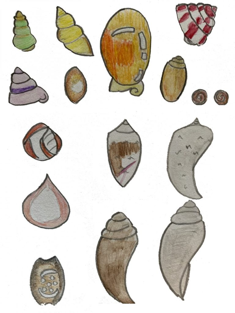 Shell illustrations by Laura age 10