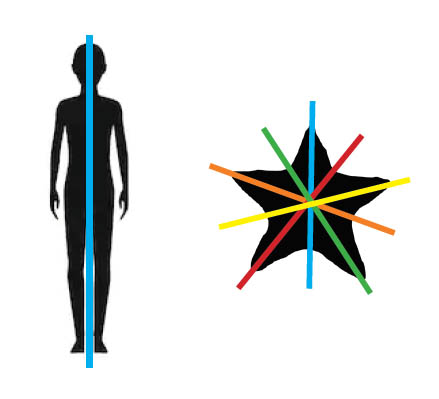 Silhouettes of a human and a starfish showing their lines of symmetry using coloured bands